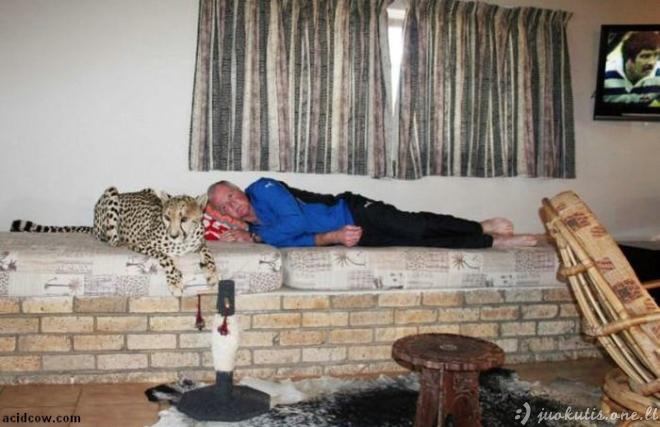 Naminis gepardas