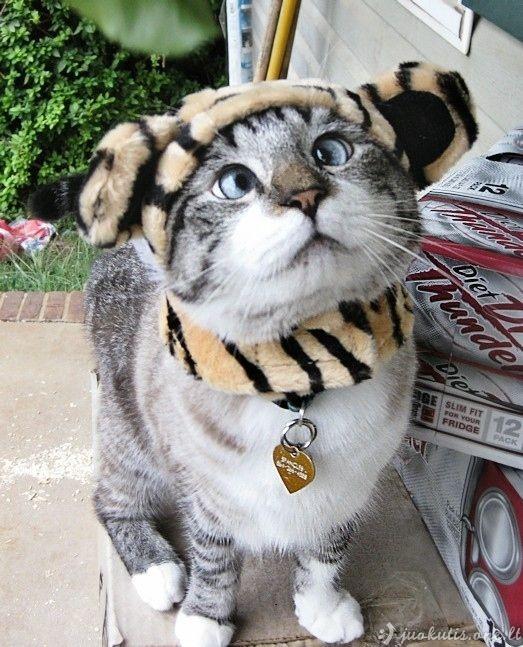 Fotogeniškiausias žvairas katinas pasaulyje