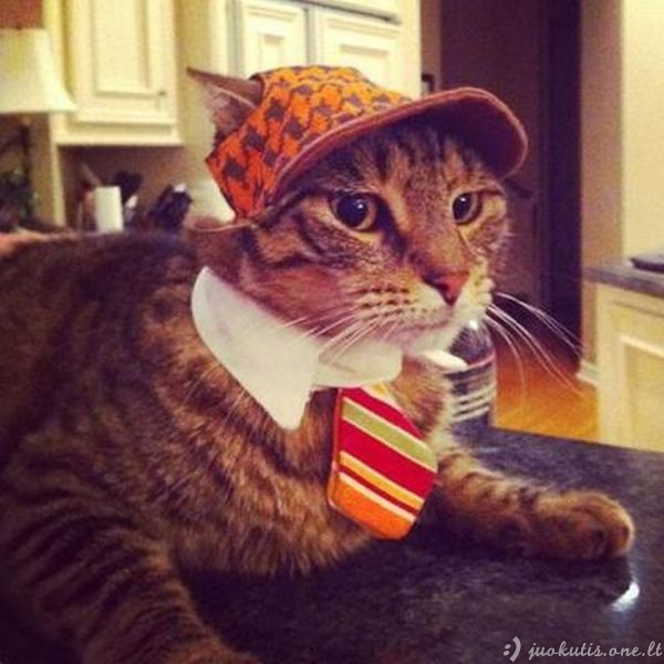 Hipsterių katinai