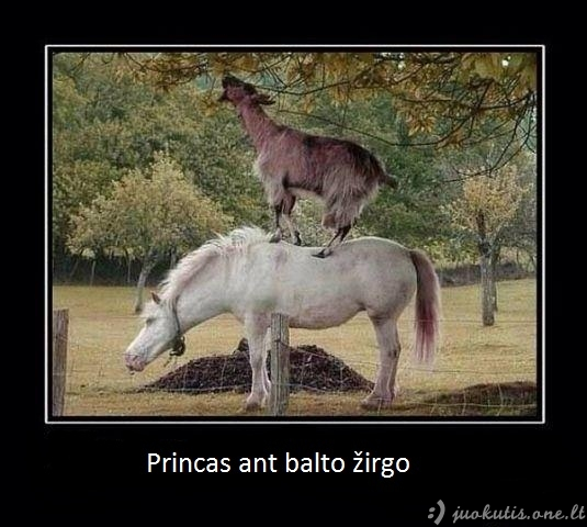 Princas ant balto žirgo realiame gyvenime