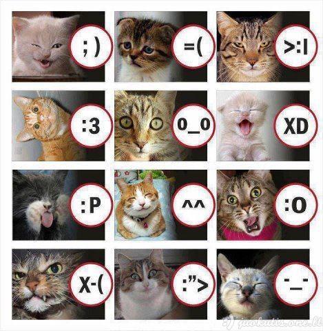 Kačių smailai