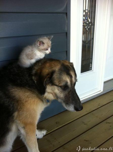 Mielai mielų gyvūnėlių rinkinukas