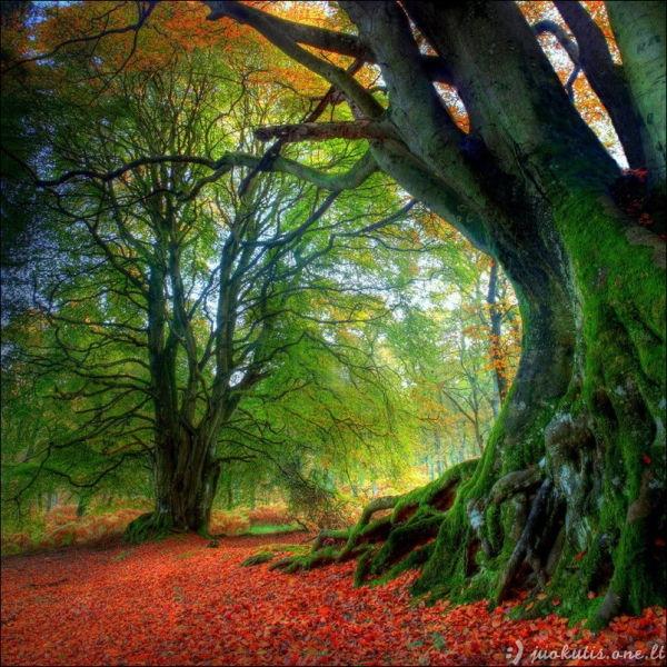 Gražiausi rudens vaizdeliai