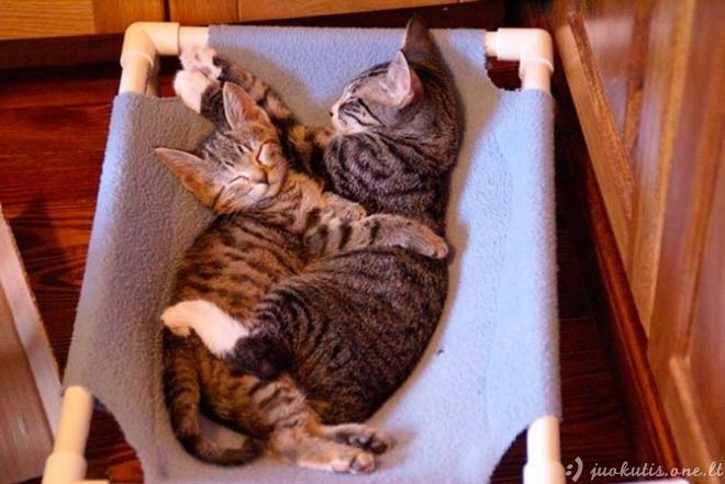 Labai mieli kačių apsikabinimai