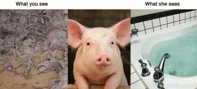 Pasaulis žmonių ir gyvūnų akimis
