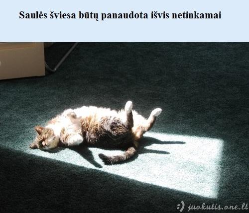 Kas būtų, jei pasaulyje nebūtų kačių
