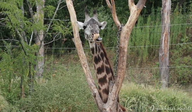 Patys mieliausi gyvūnai pasaulyje