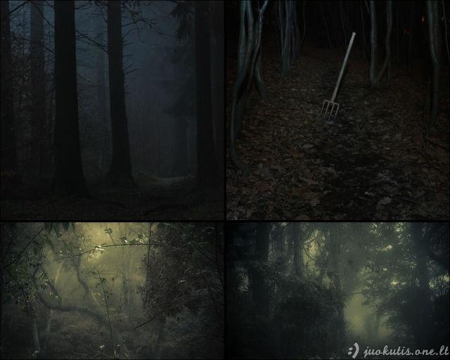 Itin šiurpūs miškai