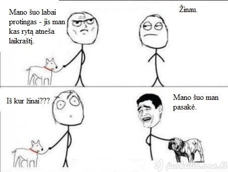 Protingi šunys