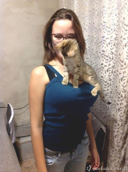 Katėms priklauso geriausios vietos