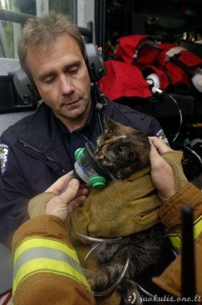 Geriečiai gaisrininkai gelbėja mielus katukus
