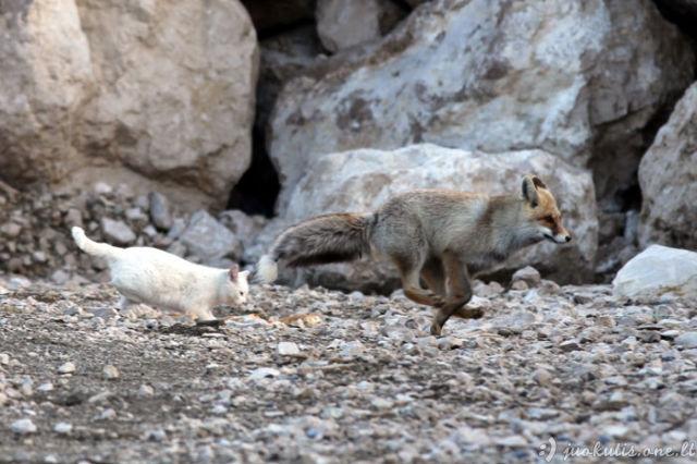 Du draugeliai - katė ir laputaitė