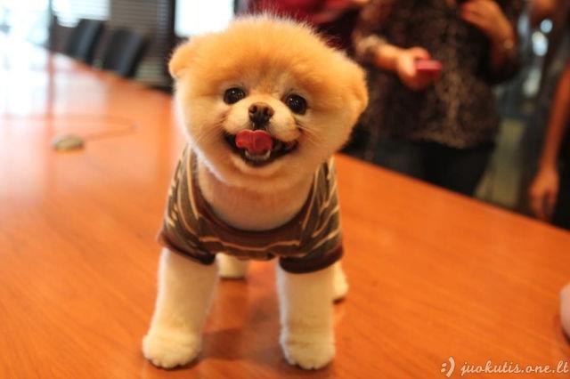 Ko gero mieliausias šunėkas pasaulyje
