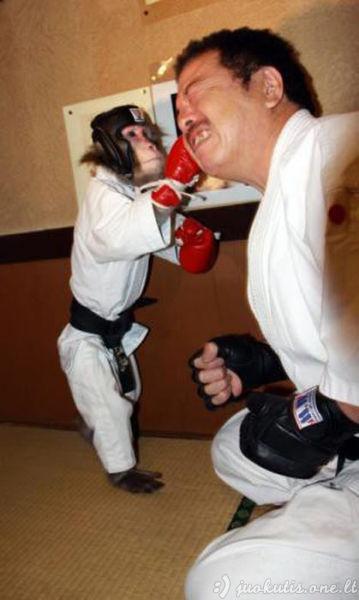 Kovinės bezdžionės treniruotė