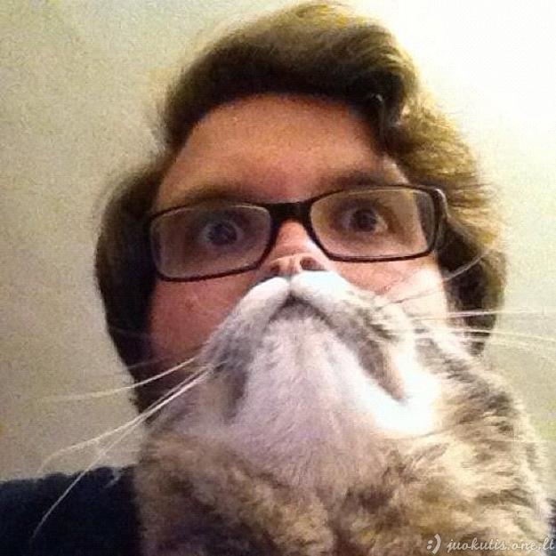 Pačiu tinkamiausiu momentu pagautos kačių nuotraukos