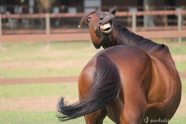 Kaip visada juokingi gyvūnai
