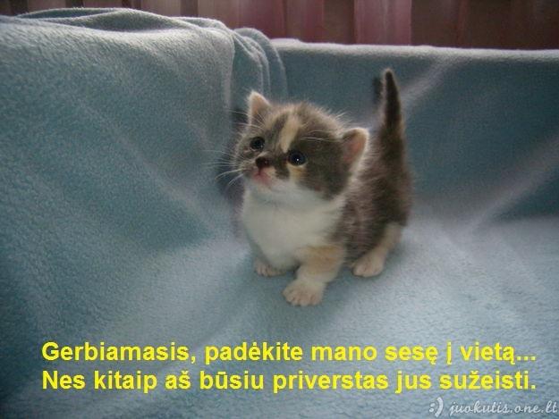 Katinuko grasinimas