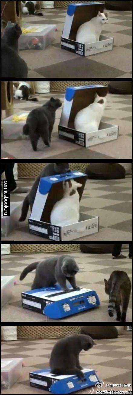 Zapadlistas katinas