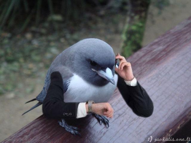 Neįprastos paukščių nuotraukos