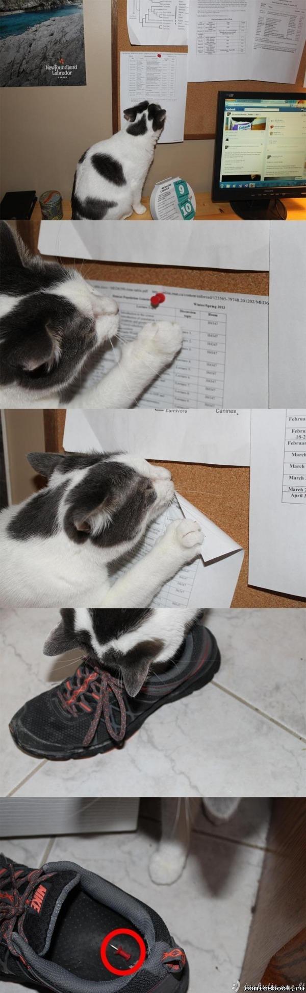 Zapadlistas katinas...