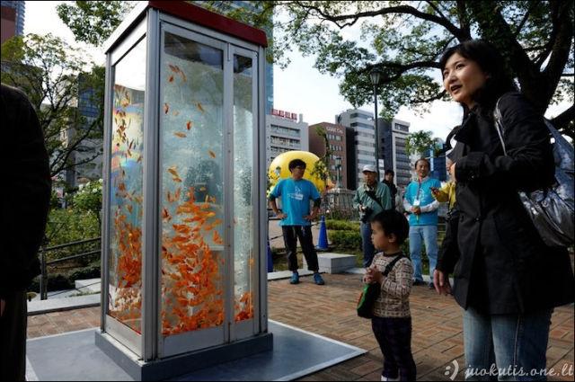 Akvariumas telefono būdelėje