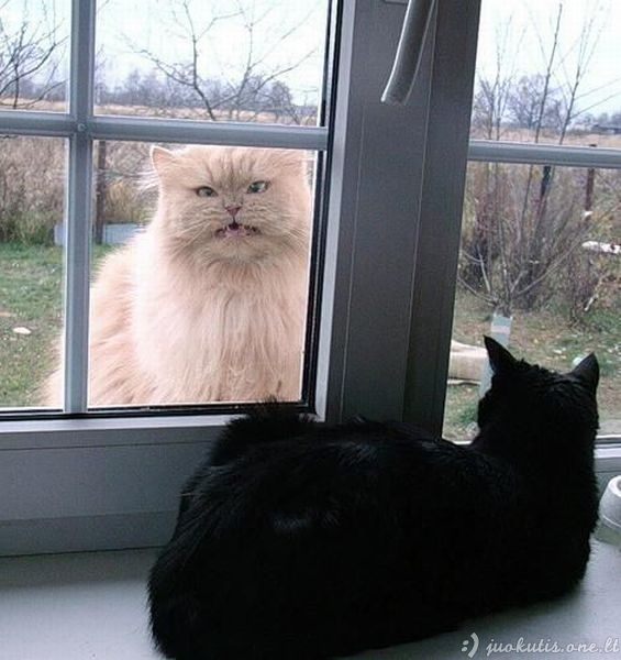 Oi tie juokučiai gyvūnai...