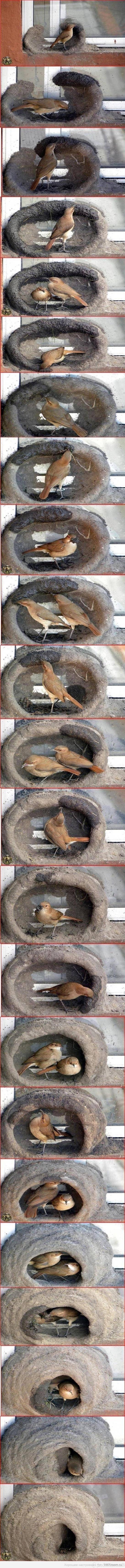 Paukšteliškos statybos
