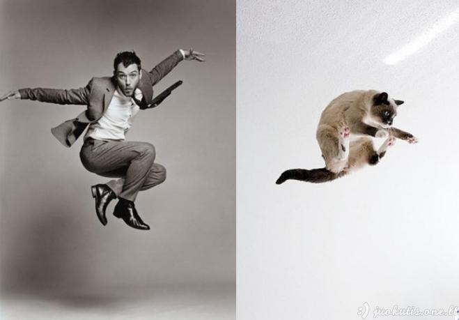 Katės, atrodančios tarsi fotomodeliai