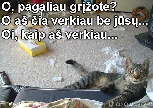 Verksniukas katinas