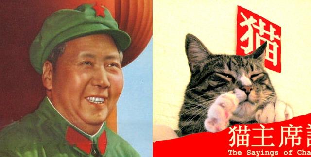 Katės atrodančios kaip diktatoriai