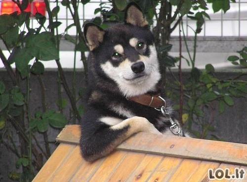 10 gyvūnų pozuojančių priešais fotoaparatą
