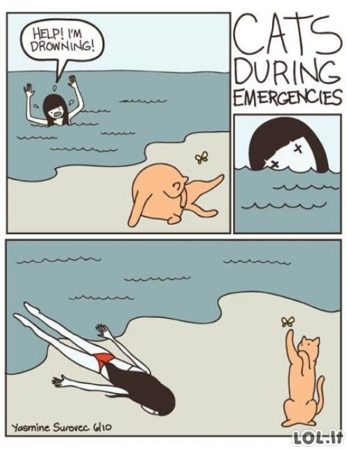 Katinai pagalbininkai