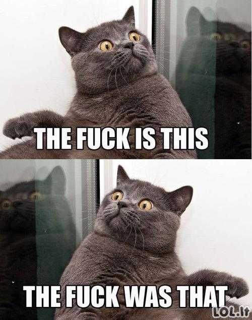 Paranojiškas katinas
