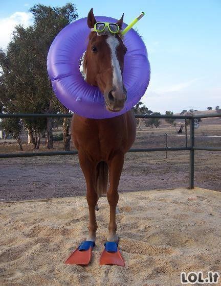 Jūrų arkliukas