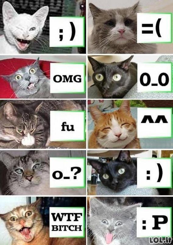 Katės internautės