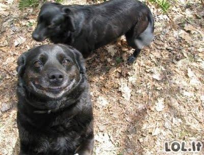 Besišypsantys šunys