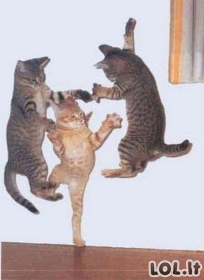 Kačių gimtadieniai