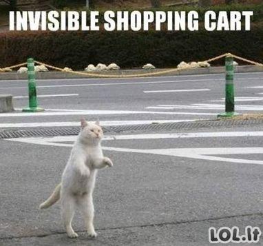 Nematomas kačių pasaulis