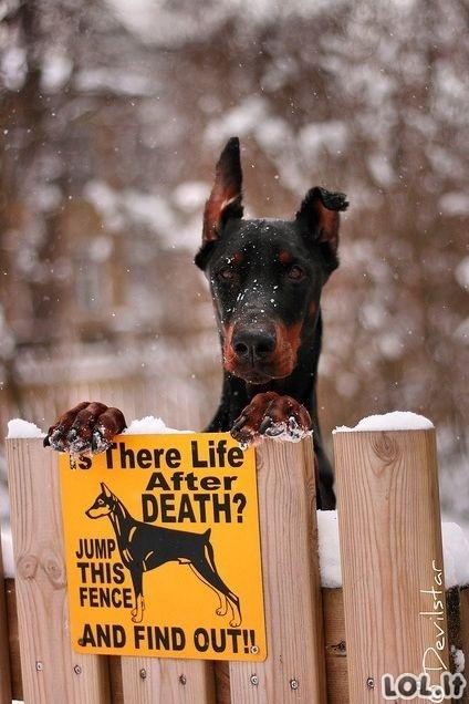 Ar yra gyvenimas po mirties?