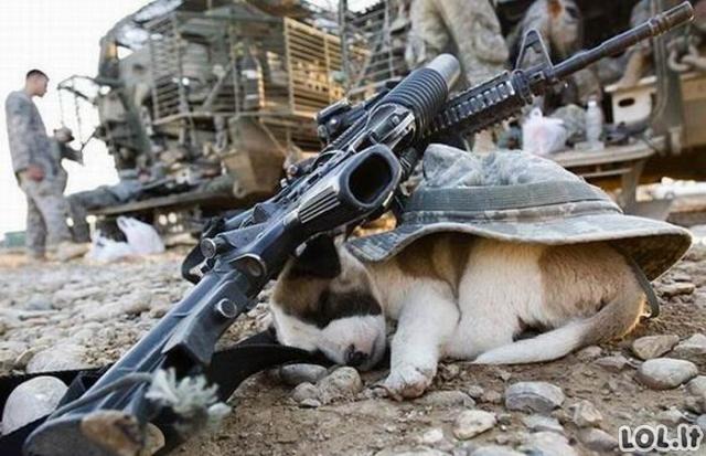 Tuo tarpu armijoje