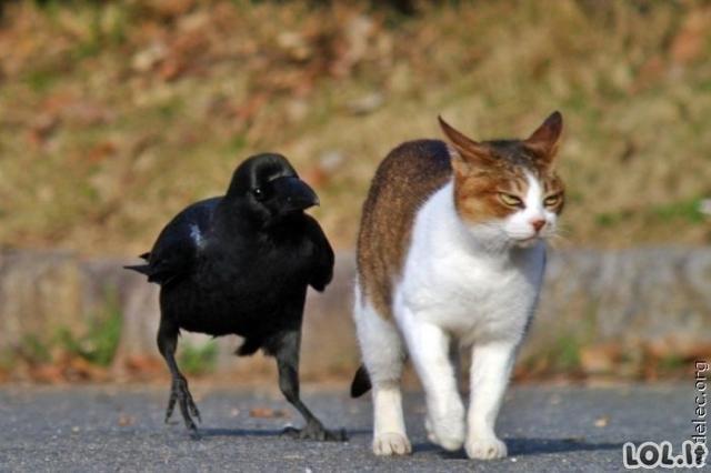 Įsimylėję gyvūnai