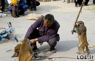 Gyvūnai kaip žmonės!