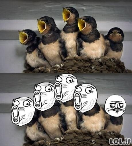 Paukštukai