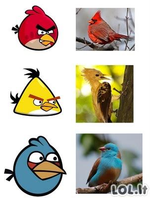 Pikti paukščiai realybėje