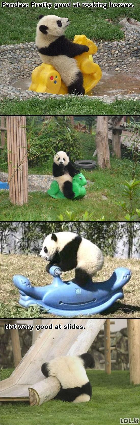 Pandų gebėjimai