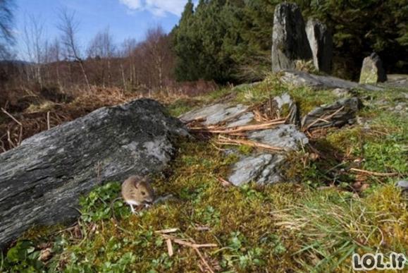 Laukinė gamta 2011 (TOP-20)