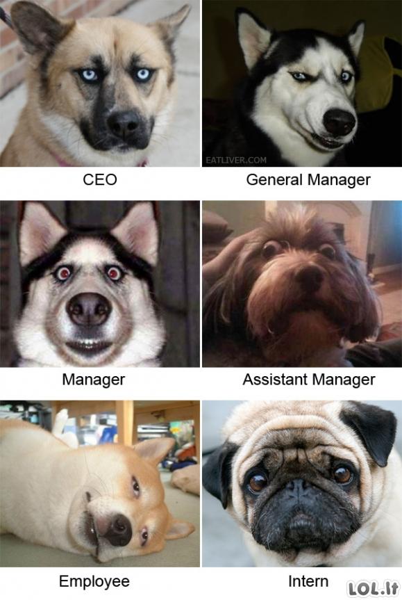 Šunų pareigos
