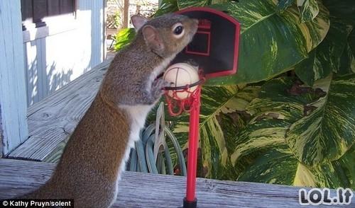 Sužmogėjusi voverytė