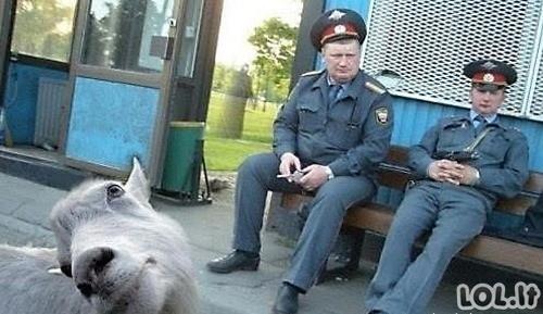 Gyvūnai fotobomberiai