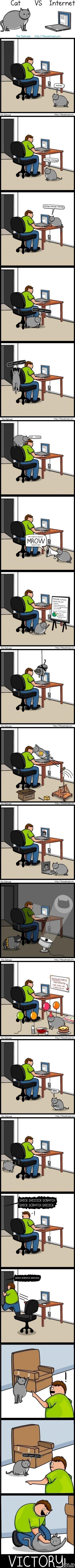 Katė prieš internetą